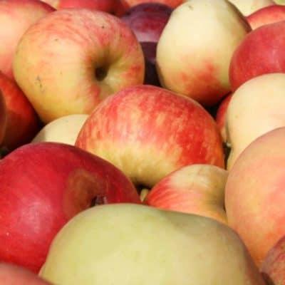 Polskie jabłka genewa / piros