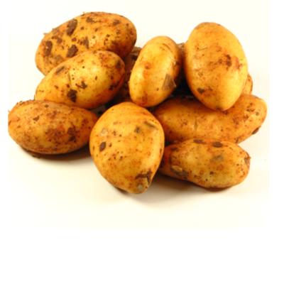 POLSKIE młode ziemniaki
