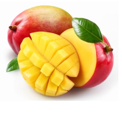 Mango szt